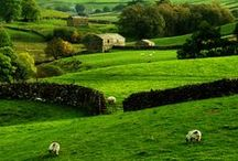Stunning Yorkshire, UK / The home of my parents and ancestors. I lived there as a youngster............lots of happy memories including our annual vacations at the seaside  Whitby, Bridlington etc. / by Julie Morton White