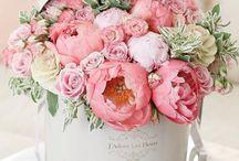 .Blumig. / Blumen sind nicht nur Blumen, sie versüßen einem den Tag, sie machen den Raum fröhlicher und du machst anderen damit eine Freude. Blumen machen mich HAPPY!
