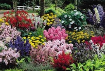 Cottage Gardening / The cottage garden is a distinct style of garden that uses an informal design, traditional materials, dense plantings, and a mixture of ornamental and edible plants. English in origin, the cottage garden depends on grace and charm rather than grandeur and formal structure. ...