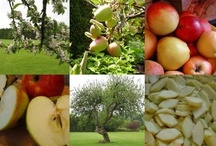 Apples, Berries and Cherries! / Food can grow on trees. Enjoy your harvest.