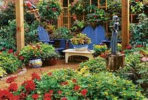 Container Gardening / Growing flowers and vegetables in all types of containers / by Margie Forrest