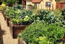 O meu quintal / Gardening