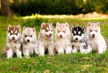Puppy Dogs / by Taylor Kooken