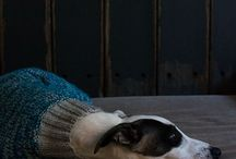 whippets in the home / stylish and elegant, whippets in the home will only enhance it!
