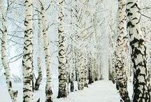 winter wonderland  / by Megan