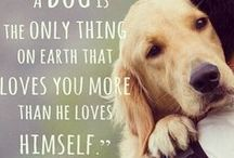 quotes for dog lovers / A collection of what dogs might say if only they could speak!