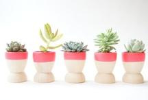 Green : Garden Ideas