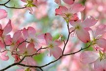 flowers beauty
