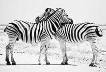 black&white ELEMENTS