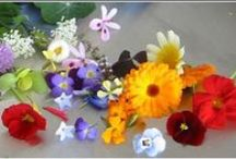 Edible Flowers / edible flowers. flowers to look at, admire, and then eat / by elizabeth jacoby design