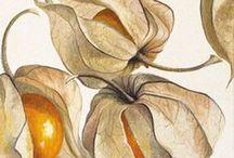 Botanical Beauties