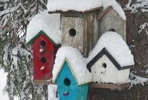 Bird House s