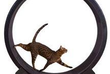 Bengal Cat Toys / Bengal Cat Toys