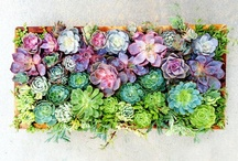 Plants n Pots / succulents and pottery @eyeoftheday / by Robin Karlsson