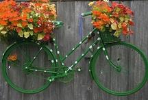 cycling / by Robin Karlsson