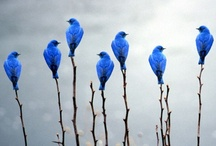for the birds / by Robin Karlsson