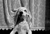 Animalario Universal / by Natalie Romero