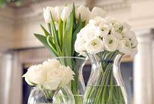Flowers + arrangements