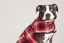 Muffinhead Dog Jackets / www.muffinheaddog.com Handmade with love in Portland, OR since 2010 / by Emily Lariviere