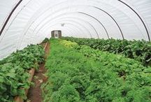 Hoop Houses / Season extension is generally regarded by both growers and researchers as the single greatest benefit of growing in hoop houses. When properly managed, hoop houses are capable of extending the growing season for frost-sensitive crops by as much as 60 days; 30 days on the front end and 30 days on the back end of the growing season.