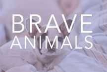{Be Brave} with Animals! / This board is a collection of all things animals that we love! We support several animal causes at www.bravelets.com / by Bravelets
