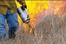 Prescribed Burning / Prescribed fire is one of the most powerful and important land management practices available to agricultural producers and land stewards.