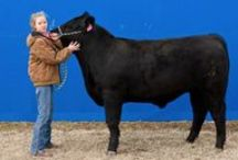 Junior Beef Excellence Program / The Noble Foundation Junior Beef Excellence Program recognizes the carcass merit of steers exhibited at the junior livestock shows by 4-H and FFA members in eight south central Oklahoma counties.