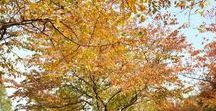 Weather: Fall / Fall Autumn Weather Themed activities, arts and crafts for toddlers, preschool and elementary aged kids.
