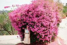 flowers / by Kristina Meltzer