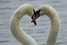 Valentine's Day / by Marian MacPherson