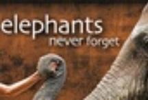 World Elephants  / by Ashley Melsted