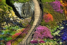"""Stairways /       """"The vision must be followed by the venture. It is not enough to stare up the steps - we must step up the stairs.""""-Vance Havner"""