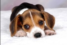 Cute Little Furry Friends / Adorable animals to share your home with...