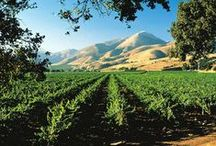 Santa Barbara Wine Country / Santa Barbara and Santa Ynez Wine Country Trips.