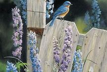 Blue Birds / In their habitat / by Marian MacPherson