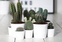 decor • plant