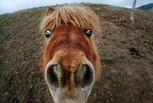 Horse / Everything horse