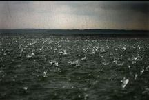 SJÖ / sea, lake, lough, loch, mere, wave / by Kailey Adams