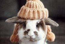 Animales a la moda