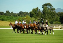 Polo at Val de Vie Estate