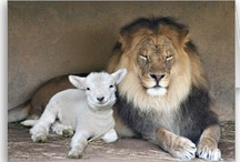 Lion of Judah / The Lion and the Lamb quotes and photos, a symbol of how Jesus is the Lion and the Lamb.