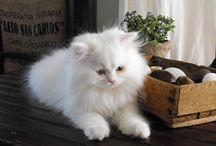 :: cats :: / by Karina
