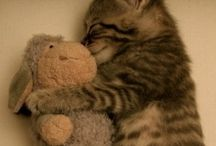 Irresistible Cuteness / Sometimes we just need a little cuteness to warm the heart