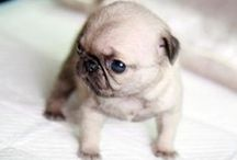 Miniature Doggies / A collection of my favorite miniature and small dogs. For more cute doggies visit http://dogpicture.tumblr.com / by De Vonee Kaiser