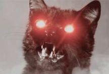 Black Cats & Black Cats & Black Cats / RIP Nekochan 2008-2015