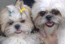 Puppy Love and Shih Tzus / by Mary Lou Stapleton