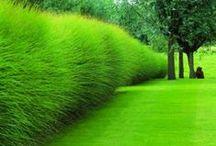 Landscape Likes