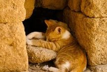 cute animals / by Catharine Page