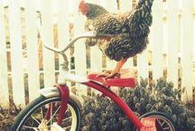 I Love Chickens! / by Brook Moniger