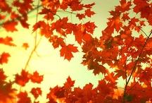 I <3 Fall!